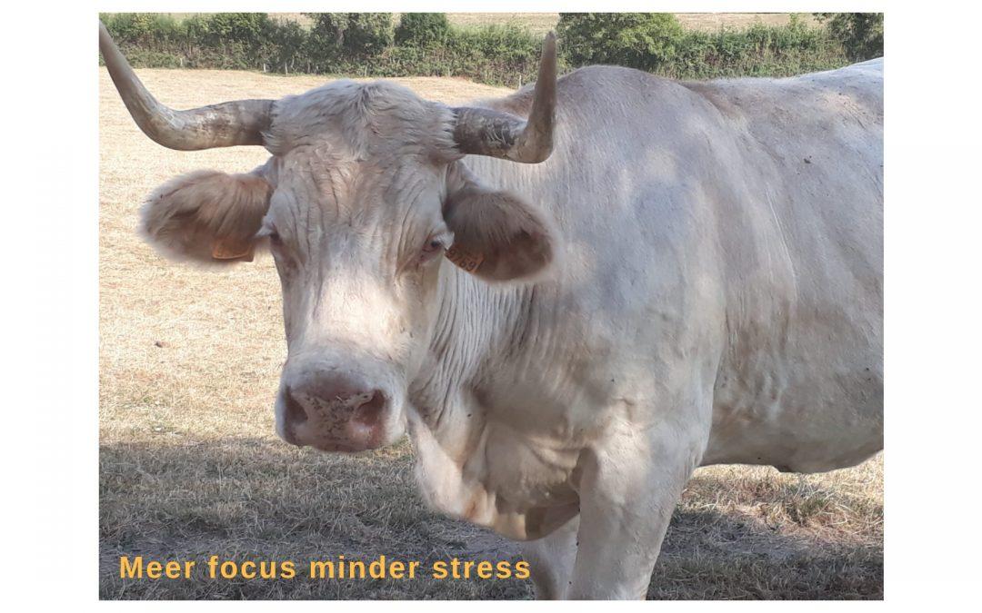 Meer leuke dingen doen, meer stress!